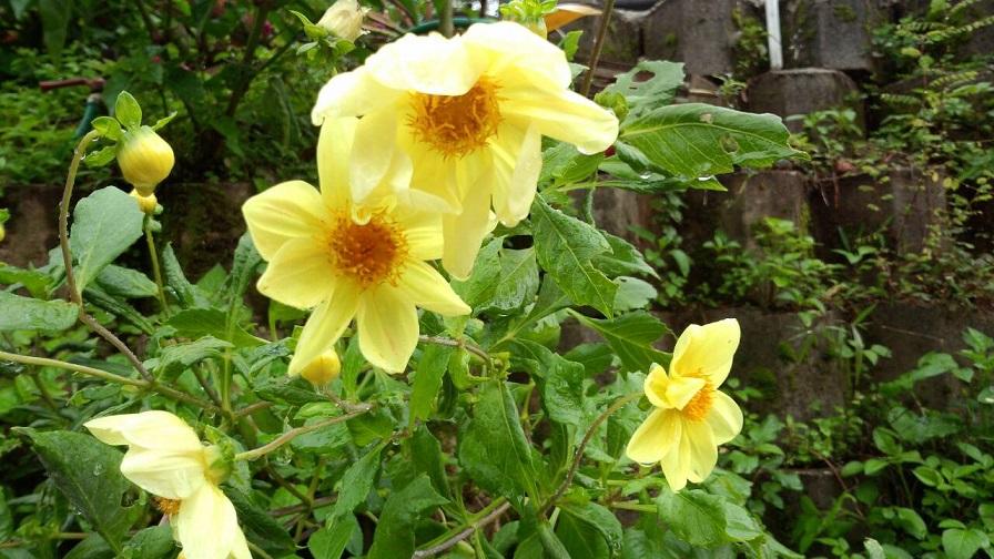 熱帯のお花6