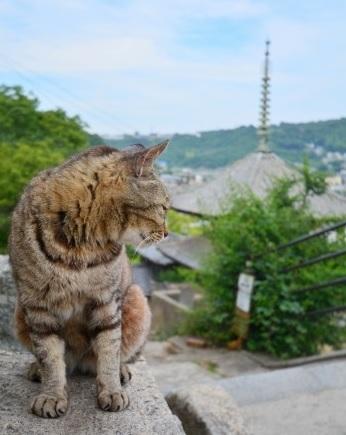 千光寺公園2千光寺道で見つけた猫