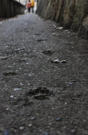 猫の細道1艮神社の脇から天寧寺の三重塔へ至る路地は「猫の細道」と呼ばれています。道には猫の足跡が残っていたり、福石猫と呼ばれる猫がデザインされた石が至る所に置かれています