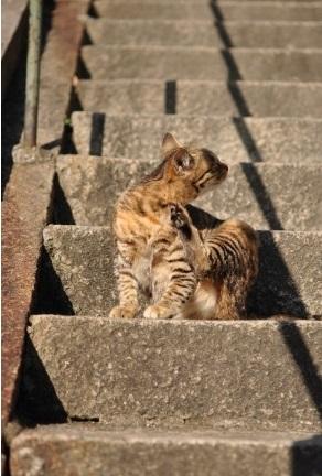 猫の細道7千光寺道にいた猫