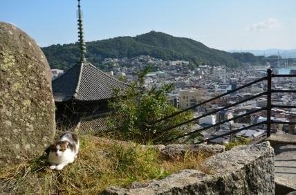 猫の細道8