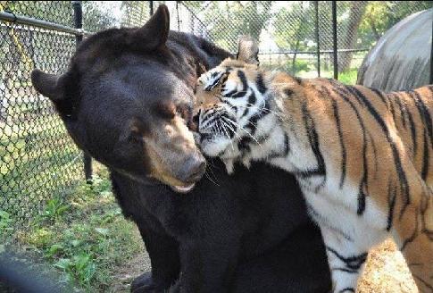 アメリカのジョージア州で一緒に暮らしているクマ・トラ