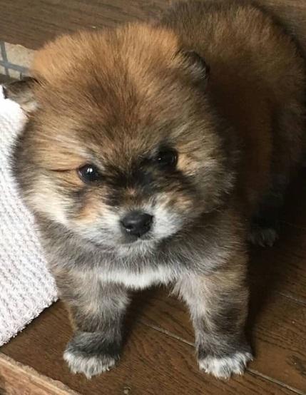 東温市子犬1