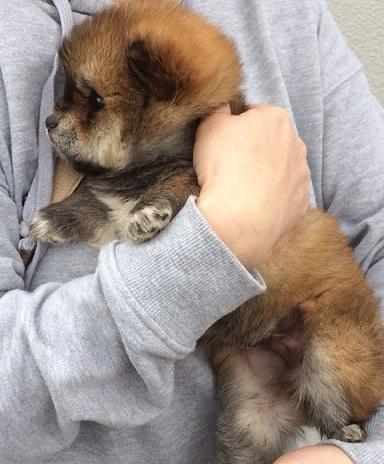 東温市子犬3