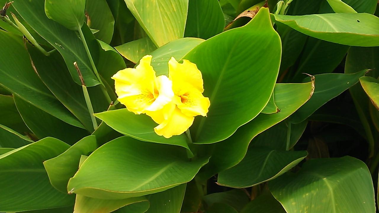 近くの黄色い花