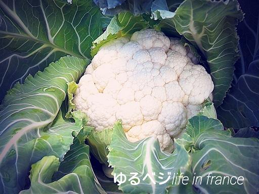 chou flour20151125①