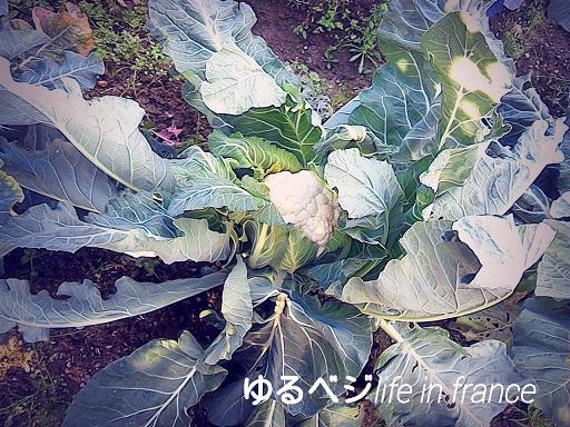 chou flour20151125②