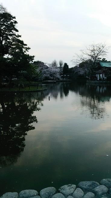 八幡宮の源平池