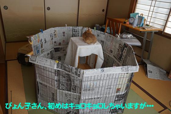 ぴょん子151111_02