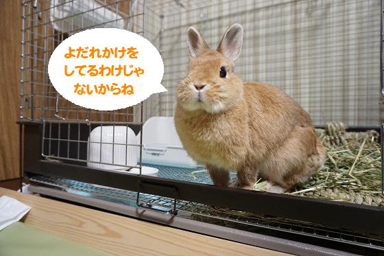 ぴょん子151125_04