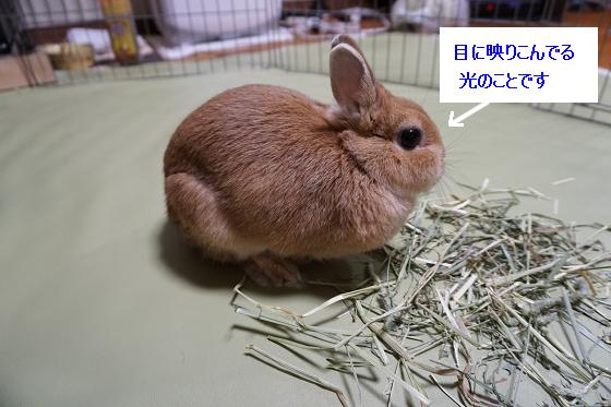ぴょん子151201_06