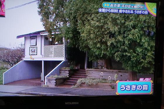 ぴょん子151204_04