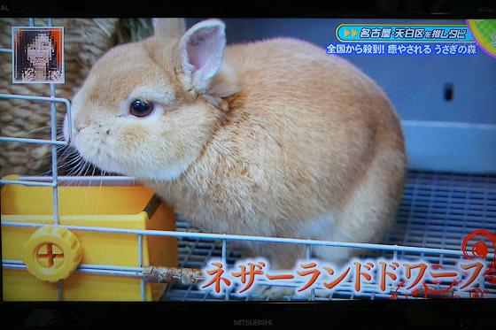 ぴょん子151204_05