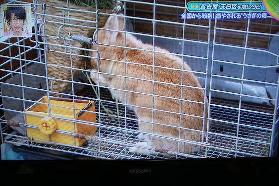 ぴょん子151204_06