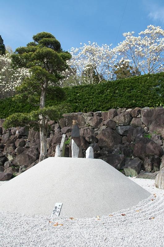 十輪寺の木蓮 2