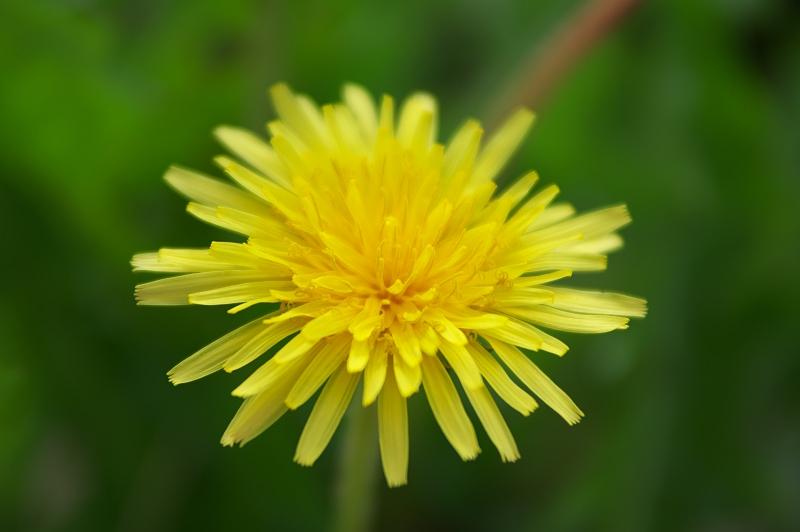 棚田に咲く黄色の花
