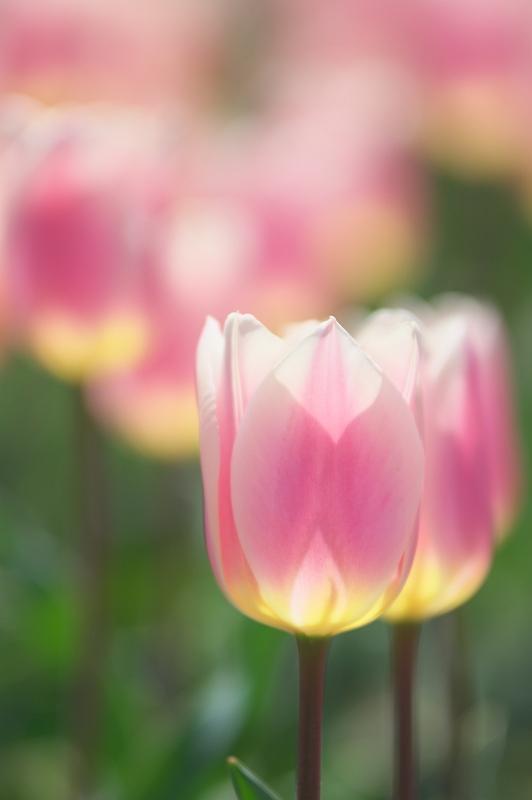 花の園 1