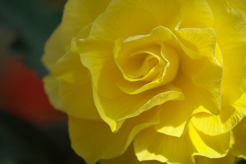 花の園 2
