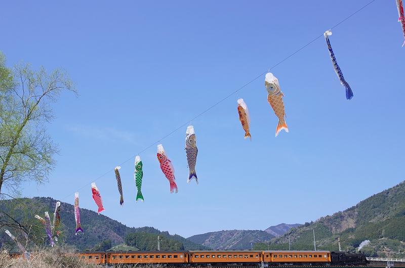 大井川鐵道 桜と鯉のぼりの風景