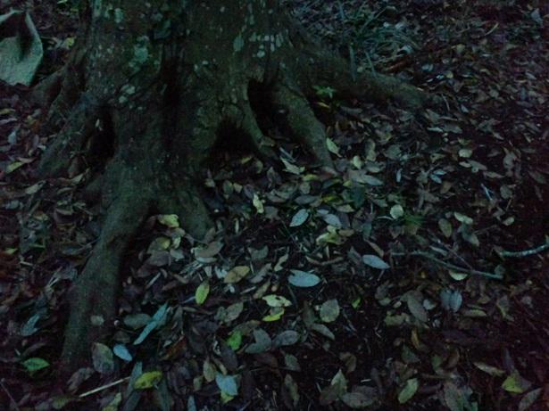 いめーじ木の根っこ