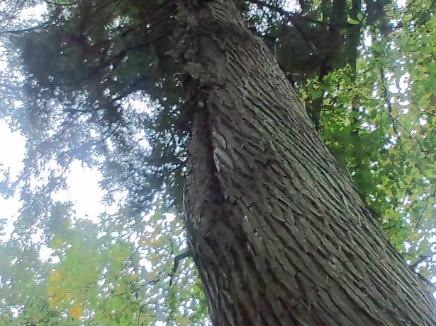イメージ木