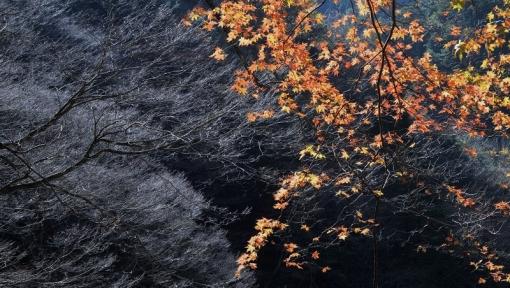 2008三段峡1511122