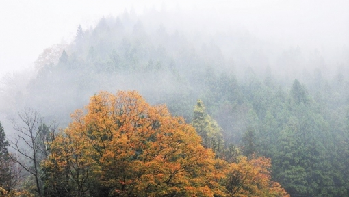 5771滝山峡1511170
