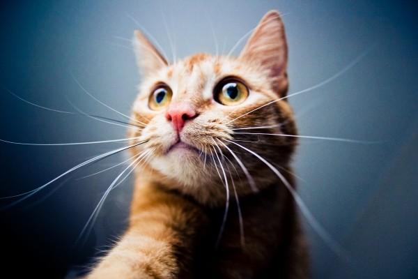 cat-looking-up.jpg