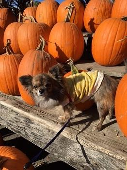 かぼちゃ1