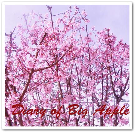 はやさきの桜