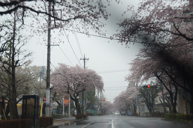 やがわらへんの桜