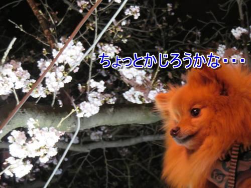 s-IMG_8160_1.jpg