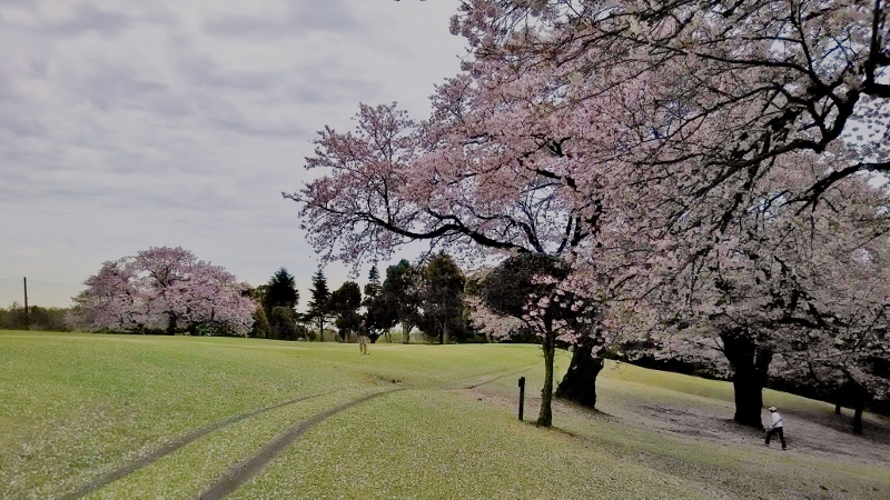 川崎ゴルフ03 (800x450)
