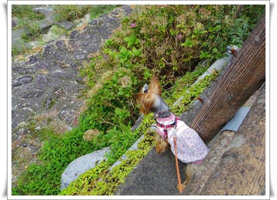 2015和歌山旅行IMGP3771-20151010