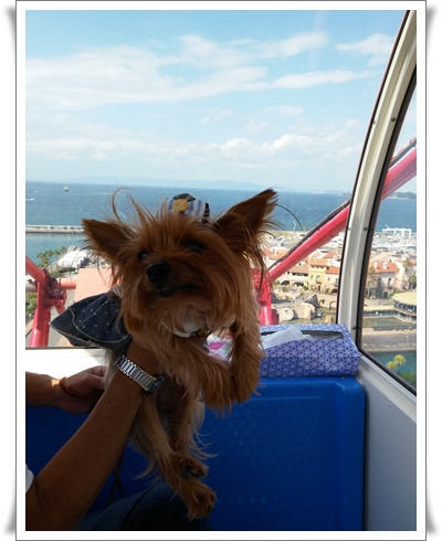 2015和歌山旅行携帯IMG00285-20151012