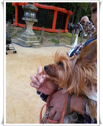 2015和歌山旅行携帯IMG00302-20151012