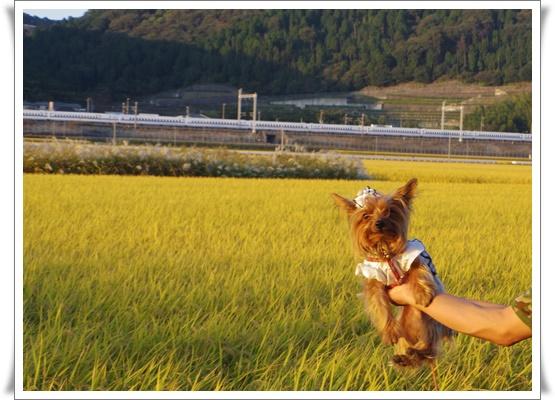 姫路運動会IMGP4034-20151017
