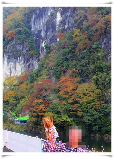 紅葉IMGP4136-20151102