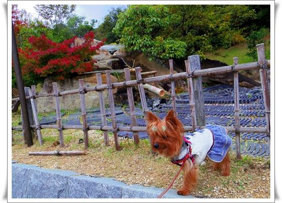 ふるさと公園IMGP4177-20151107