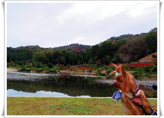 ふるさと公園IMGP4178-20151107