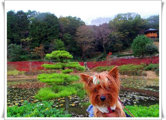 ふるさと公園IMGP4183-20151107