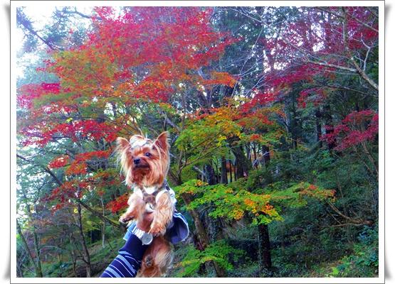 県民の森IMGP4202-20151121