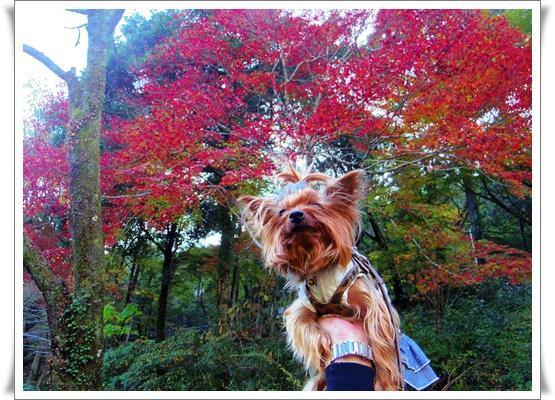 県民の森IMGP4203-20151121