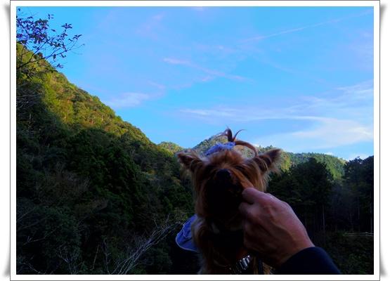 県民の森IMGP4208-20151121