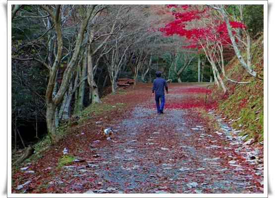 県民の森IMGP4210-20151121