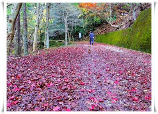 県民の森IMGP4216-20151121