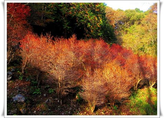 県民の森IMGP4220-20151121