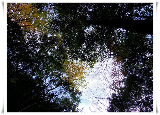 県民の森IMGP4222-20151121