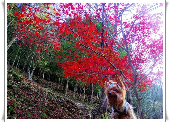 県民の森IMGP4223-20151121