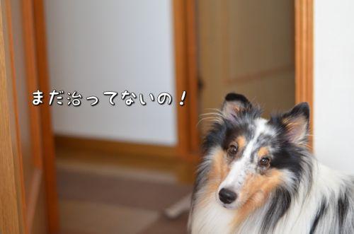IMG_6554.jpg
